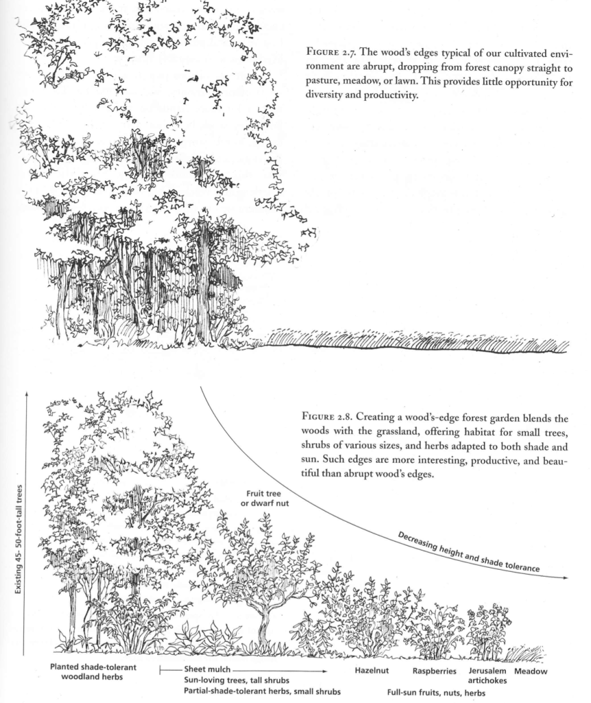 forest garden copy