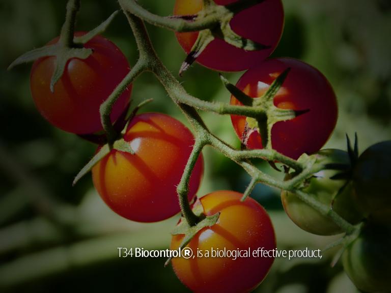 image2_frame1