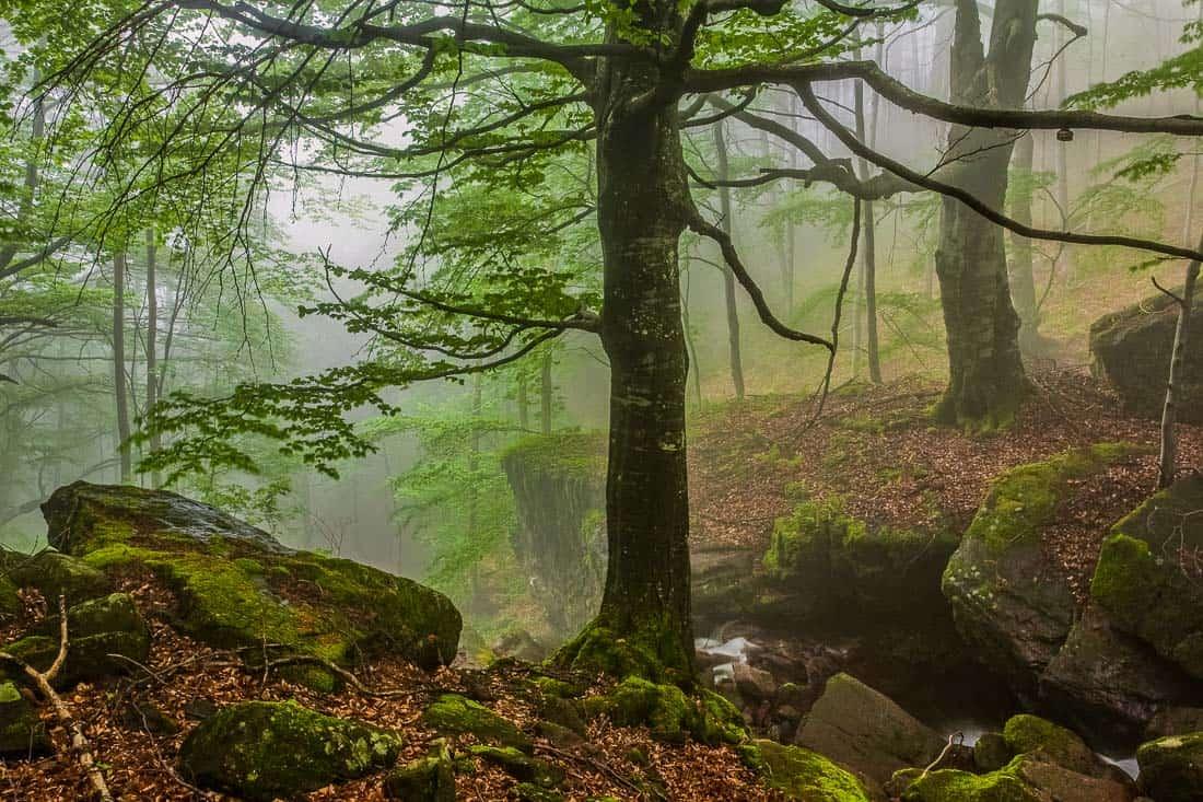 EWS - Central Balkan Wilderness -00222_