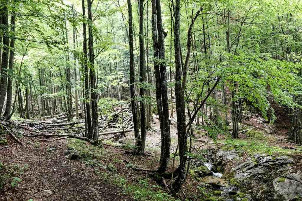EWS - Kalkalpen Wilderness -01840_.jpg