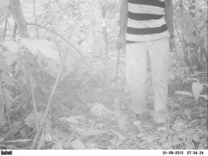 Local hunter detected in secondary forest in Oyala, Equatorial Guinea in January 2016 (Photo by BI, Bushnell field cameras).
