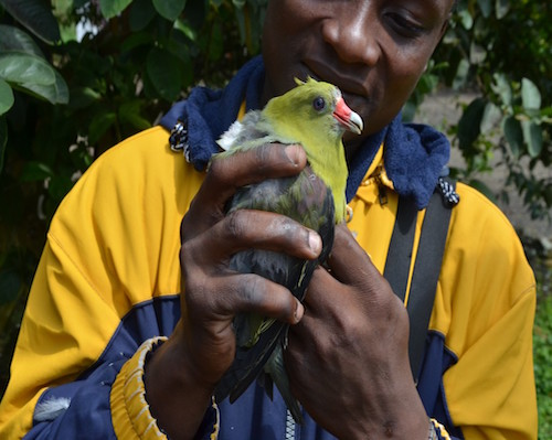 Effect of Ureka road on birds