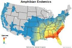 amphibians_usa_endemics_thumb