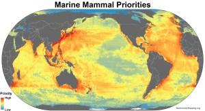 marine_mammals_priorities