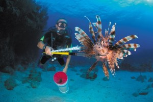 Lionfish: Is it morally justifiable to kill in the name of conservation?