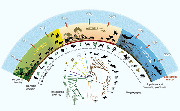 infographic phylogenetics diversity population community processes ecosystem function biogeography human impacts