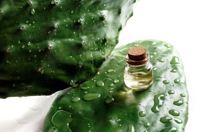the effective beauty oil prickly pear seed oil