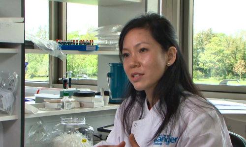 Tranquilidad dentro de poco Estadio  Virus-fighting genes linked to mutations in cancer – BIOENGINEER.ORG