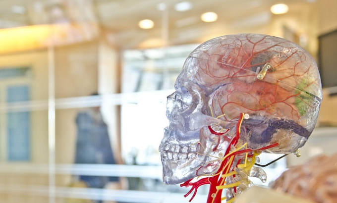 In Developing Brain Scientists Find >> Scientists Find New Path In Brain To Ease Depression Bioengineer Org