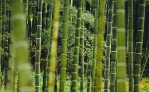 Zao Bambou