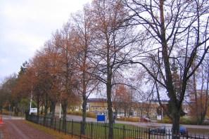 Parklind på senhösten