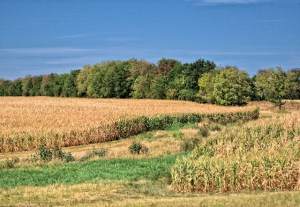 Image of farms brown from the 2012 U.S. drought. Credit: Theresa L Wysocki.