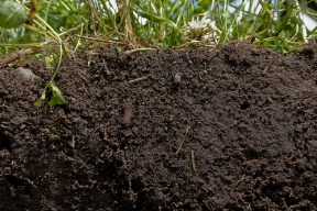 The rich, deep color of this soil indicates exactly what healthy soil looks like. Image by NRCS Soil Health via Flickr.