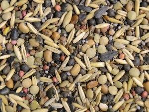 Cover crop seed blend of 17 species