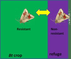 Refuge diagram