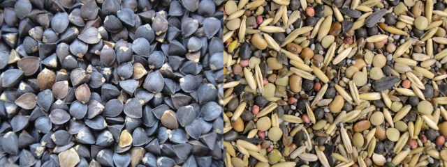 Buckwheat vs Mix seed