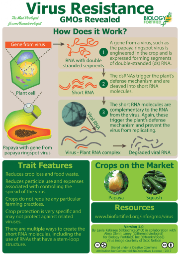 GMOs Revealed Virus Resistance Infographic