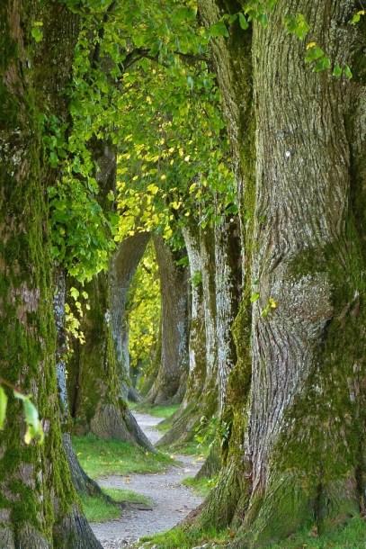 convoluted path