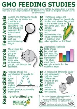 GMO Feeding Studies
