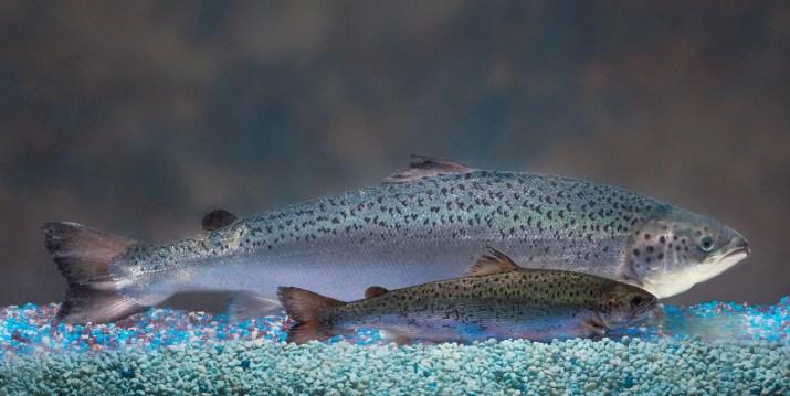 salmon supermarket