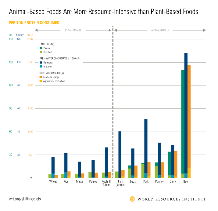sustainability of animal and plant foods