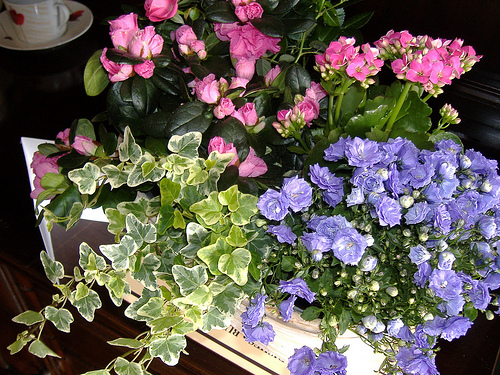 Mother's Day Flowers and Plants