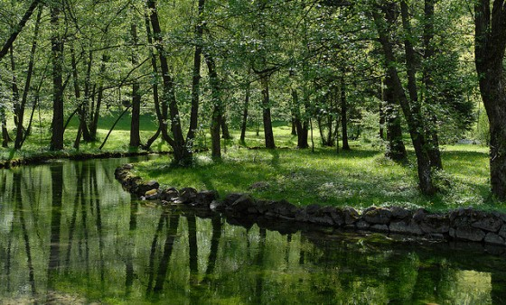 outdoors nature environment life green trees water