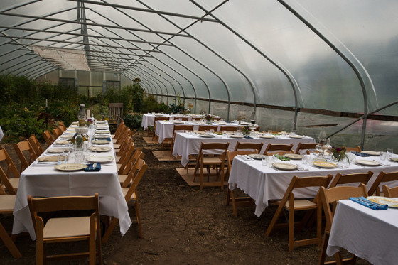 Dinner in the greenhouse