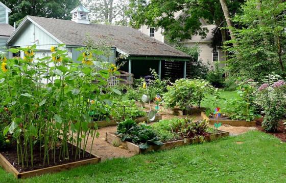organic gardening food vegetables raised beds