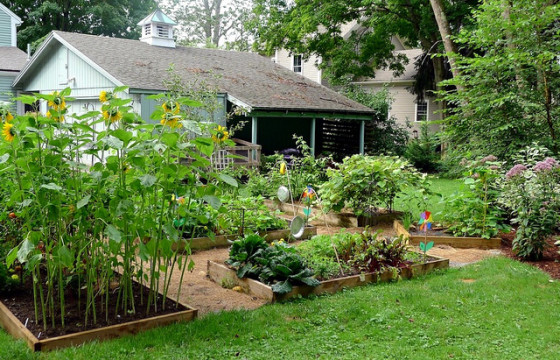 backyard garden organic produce local gmo-free