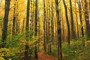 Autumn nature walk