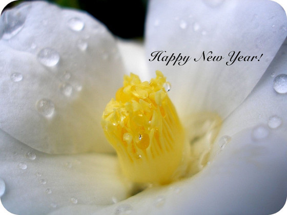 Happy New Year flower