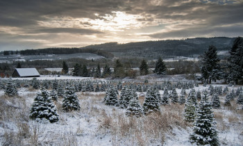 Beautiful Christmas tree farm image by Evan via Creative Commons license.