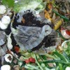 The Compost Breakdown: Digging Into Composting Issues