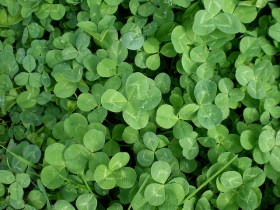 Some of My Favorite Ways to Green St. Patrick's Day