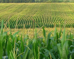 Can Biofuels Really Be a Sustainable Fuel Source?