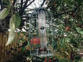An Apple in a Bird Feeder