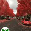 Fall in Red | Green Wings Award