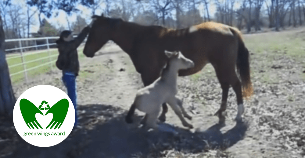 The Sneezing Foal