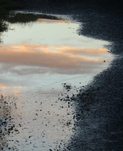 Biofriendly image of the day, Water Mirror