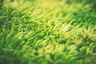 Just How Eco-Friendly is Artificial Grass?