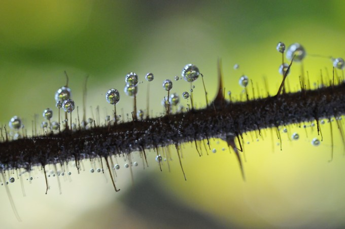 Stem Drops, Biofriendly image of the day.