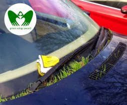 The Grass That Grew Out of The Car | Green Wings Award
