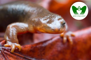 The One Eyed Newt | Green Wings Award