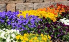 Going Organic: 10 Edible Garden Plants and Flowers