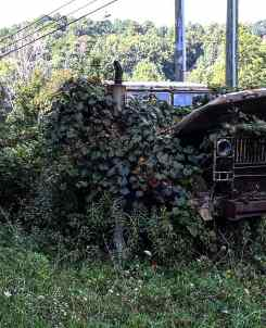 Nature taking over