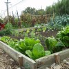 How to Get Neighbors Involved in Community Gardens