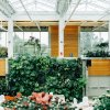 Are Living Walls Worth Creating Over Other Sustainable Options?