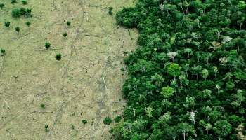 How Technology Can Help Us Reduce The Rate Of Deforestation