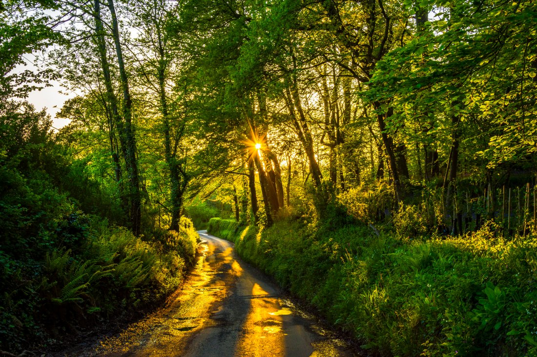 Sun shining on trees and path image by Jack Pease Photography